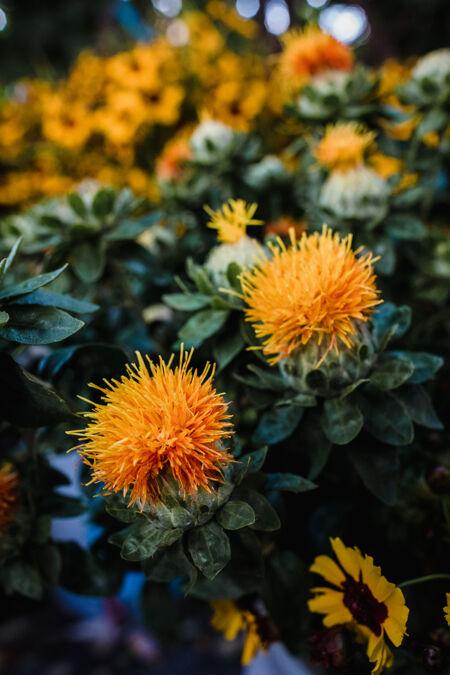 花园里有桔黄色的花